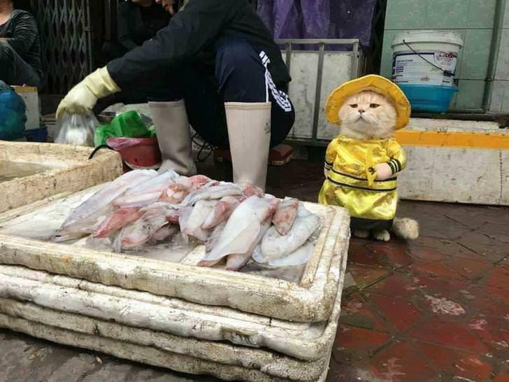 Oto Ngoui, najlepszy sprzedawca ryb na wietnamskim targowisku